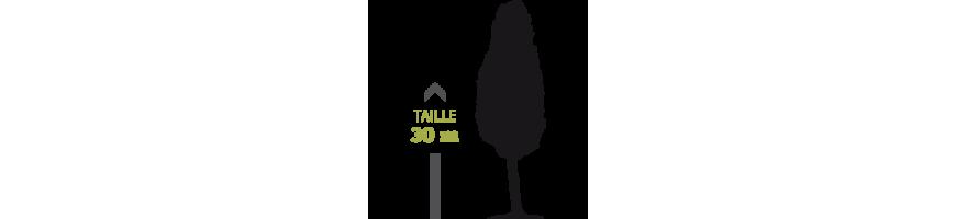 ECLAIRAGE ARBRE à feuillage dense & elancé (hauteur inf 30m)