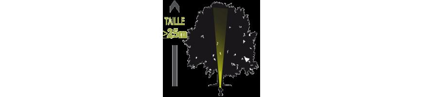 Arbres & arbustes - Feuillage dense, forme arrondie & régulière, ht sup. à 25m - Eclairage intérieur ascendant avec projecteur