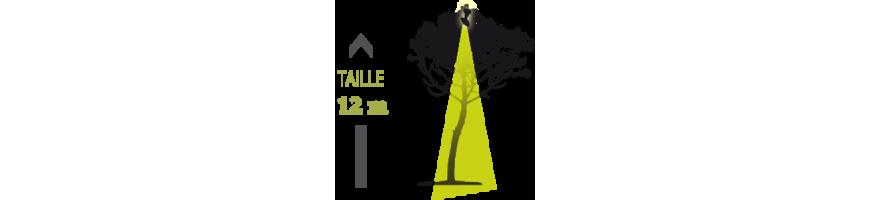 Arbres & arbustes - Feuillage plus clairsemé de forme ample ht inf. à 12m - Eclairage intérieur plongeant avec projecteur