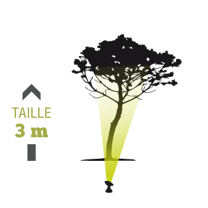 Eclairage arbre ext rieur diffusant avec projecteur 3m - Spot eclairage arbre exterieur ...