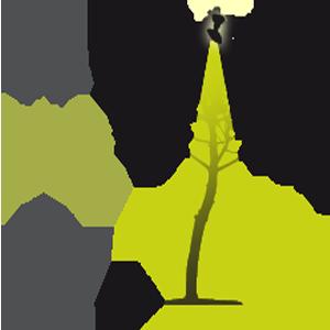 Eclairage ext rieur d 39 arbre plongeant avec projecteur d - Spot eclairage arbre exterieur ...